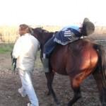 Borrador Programa Formación en Terapias con Caballos -Equinoterapia-