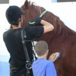 Curso El caballo como facilitador en el proceso de enseñanza/aprendizaje del niño con TDA-H