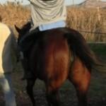 7ª Edición del Postgrado de equitación terapéutica de la Universidad de Vic